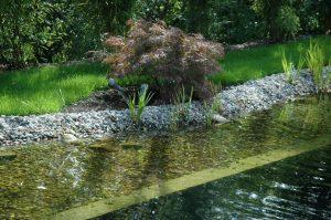 Wasser - Teich (12) 2