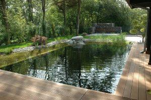 Wasser - Teich (13) 2